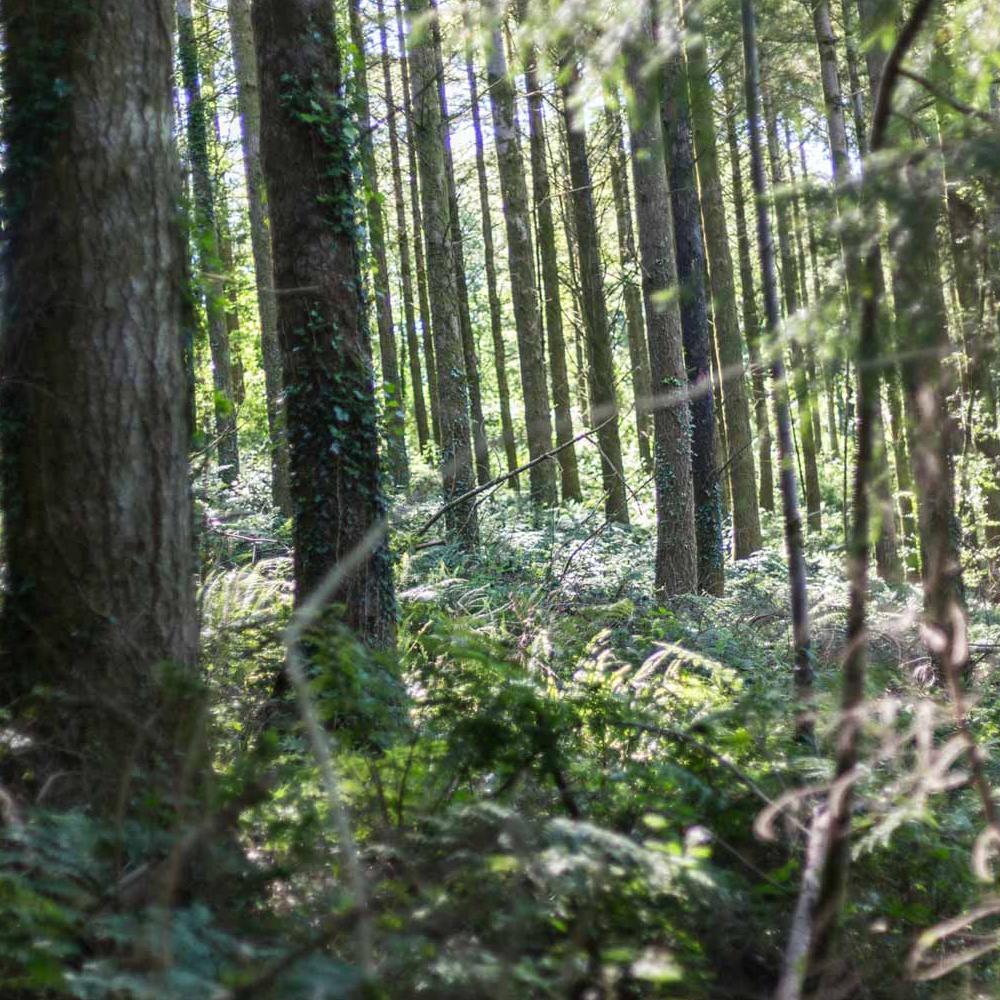 tresarran-cottages-cornwall-woods-in-herodsfoot-02